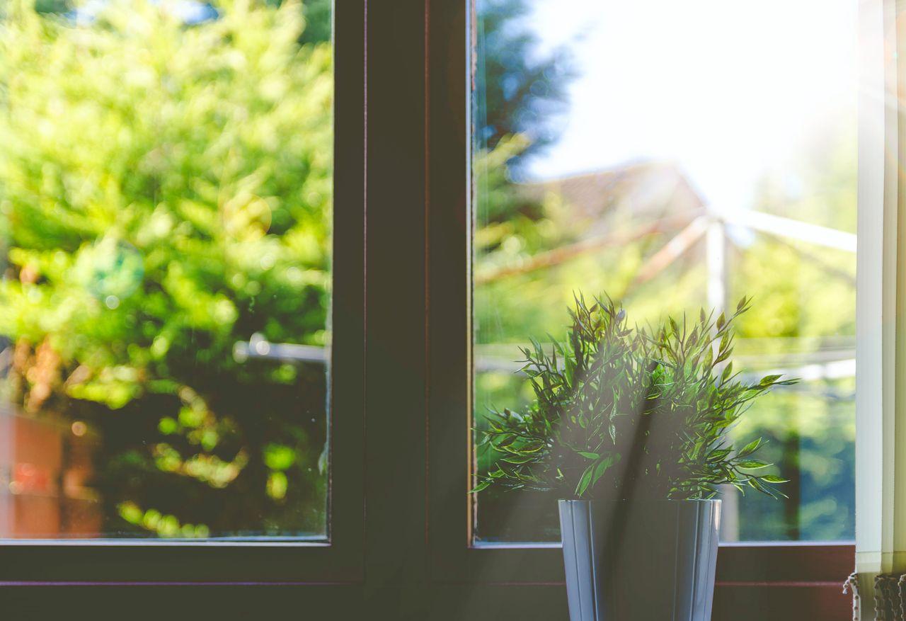 A plant on a sunny windowsill